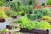 Lush and organic community vegetable, fruit and herb garden in summer with a blank wooden sign. Add  poster