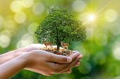 Tree In The Hands Of Trees Growing Seedlings. Bokeh Green Background Female Hand Holding Tree On Nat poster