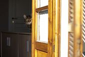 A Funny Tabby Check From The Windows poster