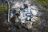 Extinct Bonfire In The Forest Close-up. Prepared Campfire Site. Fireplace With Stones poster
