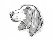 Retro Cartoon Style Drawing Of Head Of A Bracco Italiano, A Domestic Dog Or Canine Breed On Isolated poster