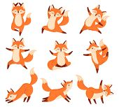 Cartoon Fox In Yoga Poses. Healthy Gymnastics, Breathing Exercises And Sport Animal Mascot. Foxes Fi poster