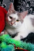 A Cute White And Tabby Cat At Home With Green Fluffy Toy. poster