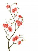 stock photo of cherry blossoms  - abstract background with cherry blossom branch isolated - JPG