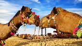 picture of hump day  - Picturesque nature landscape with Camel - JPG
