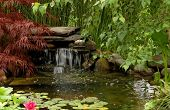 stock photo of water lily  - Water garden with waterfall in a backyard - JPG