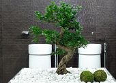 pic of lavabo  - Japanese style bathroom with bonsai tree and stones - JPG
