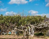 stock photo of loquat  - Loquat tree in the ground with shallow depth of field - JPG