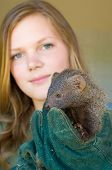 picture of animal cruelty  - Grey Mongoose Rescued From Traditional African  - JPG