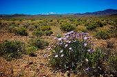 Mojave Aster Flower In Wilderness