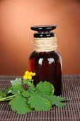pic of celandine  - Blooming Celandine with medicine bottles on table on brown background - JPG