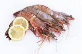 stock photo of tiger prawn  - big fresh tiger prawns - JPG