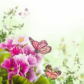 A spring primrose is in a bouquet, floral background and butterfly