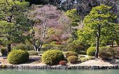 view of japanese garden in spring season