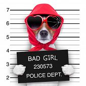 stock photo of felons  - diva lady dog posing for a lovely mugshot - JPG