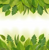 stock photo of eucalyptus leaves  - Seamless detailed illustration of the leaves  - JPG