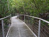 foto of darwin  - Mangrove boardwalk in East Point Reserve - JPG