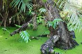 picture of chloroplast  - closeup photo of a tree trunk on a green background - JPG