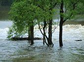 stock photo of flood  - flood swollen river  - JPG