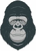 picture of gorilla  - Vector illustration - JPG