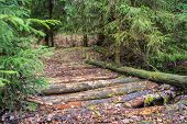 stock photo of coniferous forest  - Old forest timber bridge in dense coniferous forest - JPG