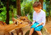 pic of deer  - cute boy feeding young deers from hands - JPG