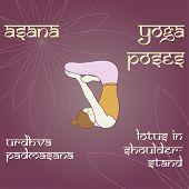 picture of padmasana  - Urdhva Padmasana - JPG