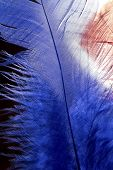 pic of unnatural  - Blue feather texture close up on a black background - JPG