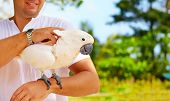 stock photo of cockatoos  - This is Molly - JPG
