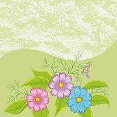 stock photo of cosmos flowers  - Floral Background - JPG