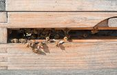 image of beehive  - entrance of a wooden beehive in sunny ambiance - JPG
