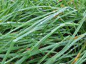 picture of bohemia  - water drops on grass South Bohemia Czech Republic - JPG