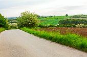 pic of vegetation  - Road is going downhill trough fresh spring vegetation - JPG