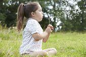 pic of dandelion seed  - Girl In Field Blowing Seeds From Dandelion - JPG