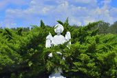 image of angel-trumpet  - Christian stone marble Angel in forest at church - JPG