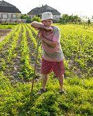 pic of hoe  - Farmer hoeing vegetable garden in springtime - JPG
