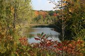 stock photo of bull rushes  - rural pond in southern onario in full fall colours with bullrushes - JPG