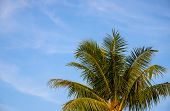 Coco Palm Tree Crown On Sky Photo. Tropical Vacation Postcard. Exotic Island Holiday. Tropical Lands poster