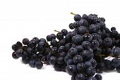 picture of gleaning  - Bunch of black juicy grapes over white - JPG