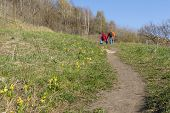 Path Among The Green Grass And Primroses, People Go To Walk Along The Path, Spring poster