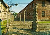pic of auschwitz  - Barbwire fence in Auschwitz I concentration camp in Poland - JPG