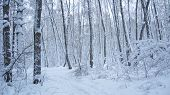 Branches Of Trees Covered With Thick Layer Of Snow. Frozen Time In Winter Forest. Trees In Snow In W poster