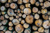 Diverse Wood Logs In Closeup, Nature Pattern Background, Lumbered Fire Wood poster