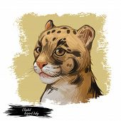 Clouded Leopard Baby Tabby Neofelis Nebulosa Wild Cat From Himalayan, Asian China. Digital Art Illus poster