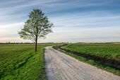 Rural Road Through Green Meadows And Lonely Tree - View In The Spring Day poster