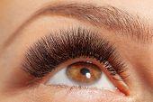 Open Eyes with Long Eyelashes False Extensions. Treatment of Eyelash Extension. Lashes.  poster