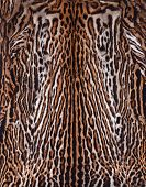 stock photo of ocelot  - beautiful leopard skin texture and details background