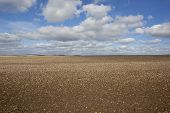 Chalky Soil On The Yorkshire Wolds