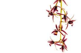 pic of six-petaled  - Composed of six petals orchid flower petal by petal as the outer petals and three inner petals - JPG
