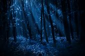 image of moonlit  - Forest on a moonlit night - JPG